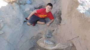 Ten-Year-Old Boy Discovers Rare Dinosaur Fossil