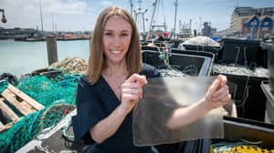 Student Designs Sustainable Plastic Alternative Made Of Fish Skin And Algae