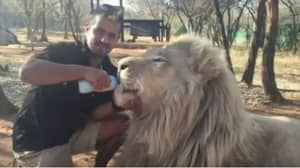 Wildlife Sanctuary Owner Finds Four Big Cats 'Killed By Poachers'