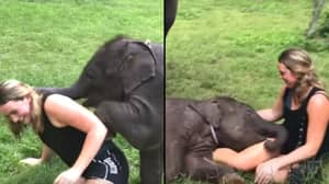 Baby Elephant Can't Stop Hugging Tourist