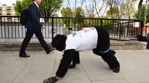 Mr Gorilla Has Finished The London Marathon Six Days Later