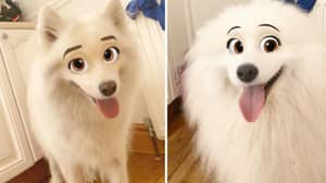 ​New Snapchat Filter Makes Your Dog Look Like A Disney Character