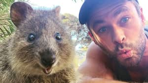 Chris Hemsworth Snaps Selfie With Quokka Before Feeding It From His Mouth