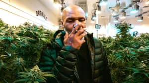 Mike Tyson 'Won't Be Tested For Marijuana' For His Exhibition Bout With Roy Jones Jr