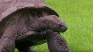 World's Oldest Tortoise Is Found To Be Gay
