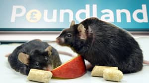 £40,000 Fine For Poundland Because Of Mouse Poo In Liverpool Shop.. 'EEK'