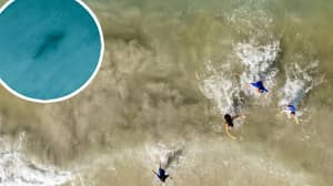 Moment Dad Spots Shark Behind Children As He Takes Photographs From Drone