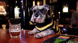 Honestly, Is There Anything Better In The World Than A Pub Dog?