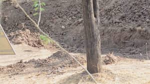 Hardly Anyone Could Spot The Camouflaged Leopard In This Viral Picture