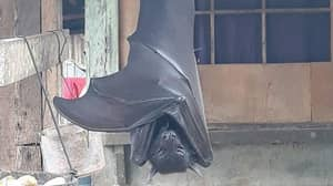 This Photo Of A 'Human-Sized Bat' Is Not Actually A Fake