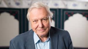 People Really Want David Attenborough To Be Prime Minister