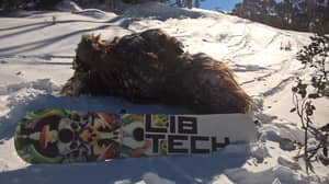 Guy Dressed As Chewbacca Banned From Thredbo For Allegedly Injuring Man