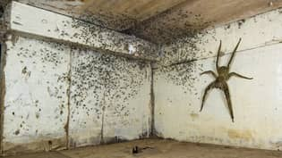 Man Finds Spider The Size Of His Hand Breeding Under His Bed