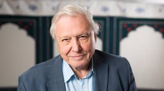There's A New Sir David Attenborough Show On Its Way