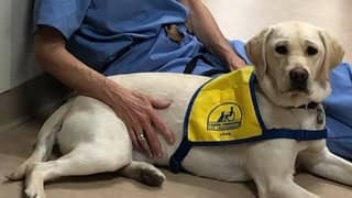 Therapy Dog In Training Is Helping People On The Frontline Of Coronavirus