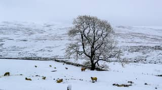 Snow Could Disappear From UK By The End Of Century, Met Office Warns