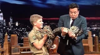 Robert Irwin Follows In His Dad's Footsteps As He Appears On The Tonight Show