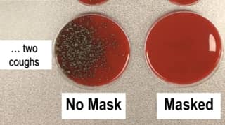 Microbiologist Shares Photos That Show How Effective Masks Are At Stopping Coronavirus Spread