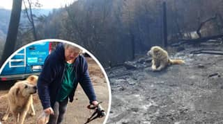 Heartwarming Footage Shows Dog Who Survived California Fires Reunited With Owner