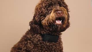 Dog Collar Translates Pets' Barks Into Swear Words