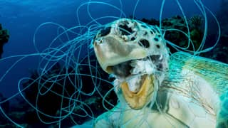 Turtle Found Dead With Fishing Line Tangled Around Its Throat