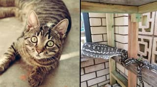 Family Horrified To Discover Snake Eating Their Pet Cat