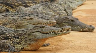 Hermès Buys 376 Acres Of Farmland In The Northern Territory For Huge Crocodile Farm