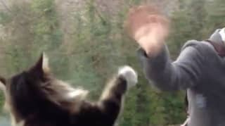 Cat And Owner Wave Goodbye To Each Other Every Day