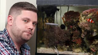 Dad Finds One Of World's Most Venomous Sea Creature In The Family Fish Tank