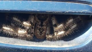 Driver Doesn't Use Car For Week After Finding Huge Spider In Door Handle