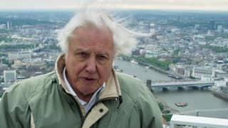 Sir David Attenborough Is Going To Present A 'Blue Planet' Sequel