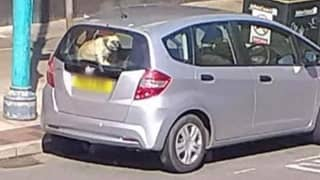 Dog Left In Car Outside Southport KFC On Hottest Day Of The Year So Far