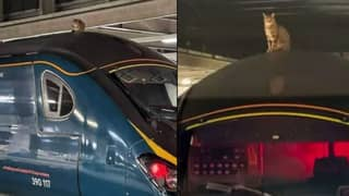 Cat Sat On Train Roof Causes A Near Three Hour Delay