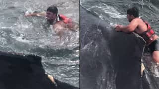 Video Shows Fisherman Rescuing Humpback Whale Trapped In Fishing Nets