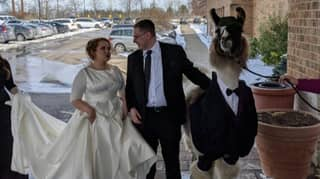 Guy Fulfils Promise Of Bringing Llama To Sister's Wedding