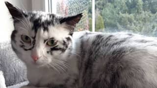Cat Changing Colour From Black To White Due To Extremely Rare Condition