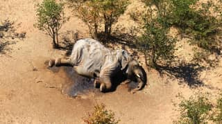 Death Of More Than 300 Elephants In Botswana Blamed On Toxins In Water