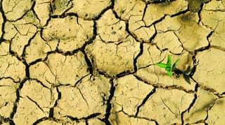 Australian Medical Association Declares Climate Change A Health Emergency