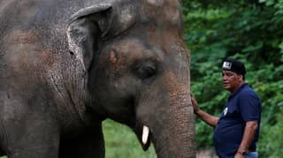 'World's Loneliest Elephant' Okayed By Medics To Leave Zoo For New Home