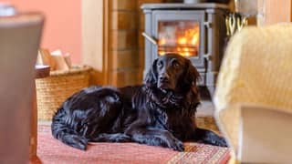 Dogs And Their Owners Wanted To Review Luxury Holiday Cottages