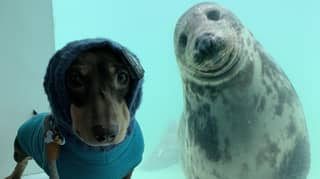 Sausage Dog And Seal Pup Strike Up Unlikely Friendship