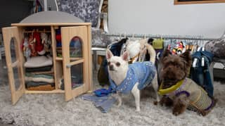 Woman Has Spent More Than £20,000 On Designer Clothing For Her Chihuahuas