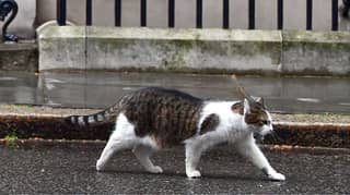 Western Australia Is Looking At Banning Cats From Going Outside