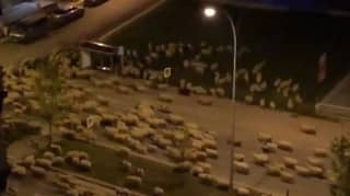 Sheep Take Over Turkish City And Run Through The Streets In Lockdown