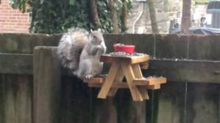 Man Builds Picnic Table For Squirrels And Inspires New Trend