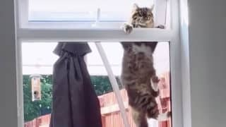 Woman Catches Random Cat Performing Pull-Ups To Break Into Her House