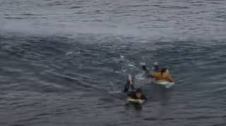 Footage Shows Moment Surfer Is Stalked In Water Before Attack