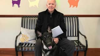 Joe Biden's German Shepherd Officially Becomes First Rescue Dog Living In White House
