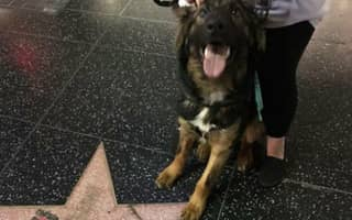 Chill-Devoid DogLAD Shits On Donald Trump's Hollywood Walk Of Fame Star