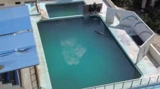 Dolphin Named Honey Dies Alone In Abandoned Japanese Aquarium